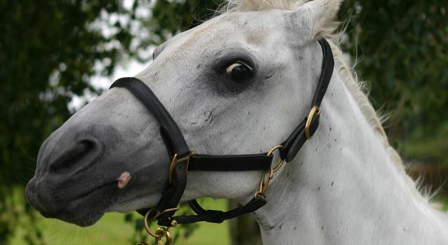 Understanding fear in my horse – Part 1
